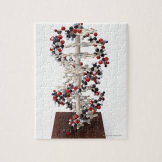 DNA Model Puzzle