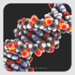 DNA molecule. Molecular model of DNA