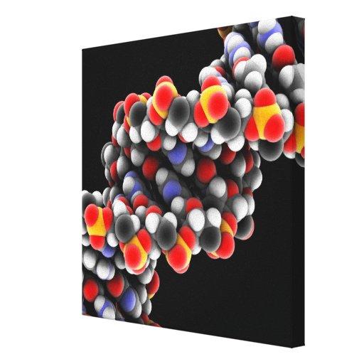 DNA molecule. Molecular model of DNA Stretched Canvas Prints