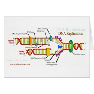 DNA Replication Card