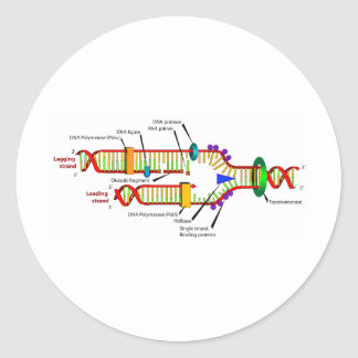 DNA replication Classic Round Sticker