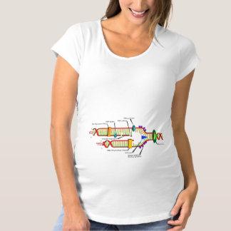 DNA Replication Maternity T-Shirt