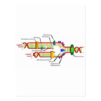 DNA replication Postcard