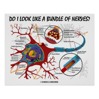 Do I Look Like A Bundle Of Nerves? Neuron Synapse Poster