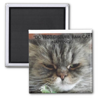 DO NOT DISTURB I AM CAT NAPPING. SQUARE MAGNET