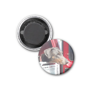 Doberman 3 Cm Round Magnet