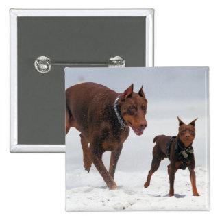 Doberman and Min Pin - LOOK A Mini Me