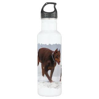 Doberman and Min Pin - LOOK! A Mini Me! 710 Ml Water Bottle