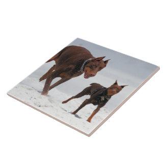 Doberman and Min Pin - LOOK A Mini Me Ceramic Tile