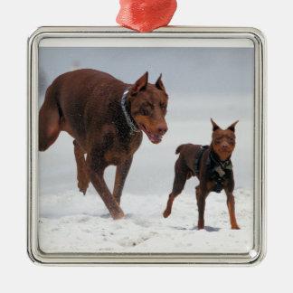Doberman and Min Pin - LOOK! A Mini Me! Ornament