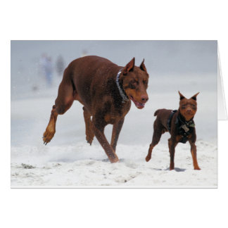 Doberman and Min Pin - LOOK! A Mini Me! Greeting Card