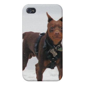 Doberman and Min Pin - LOOK! A Mini Me! iPhone 4 Cover