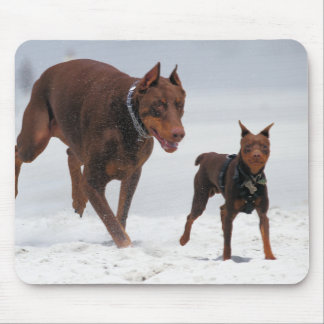 Doberman and Min Pin - LOOK! A Mini Me! Mouse Pads