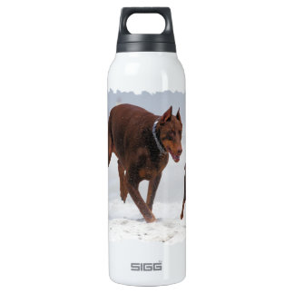 Doberman and Min Pin - LOOK! A Mini Me! 16 Oz Insulated SIGG Thermos Water Bottle