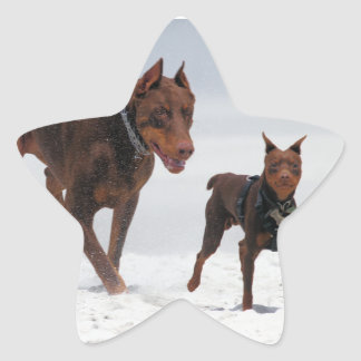 Doberman and Min Pin - LOOK! A Mini Me! Star Sticker