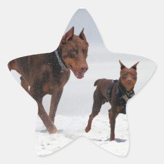 Doberman and Min Pin - LOOK! A Mini Me! Star Sticker