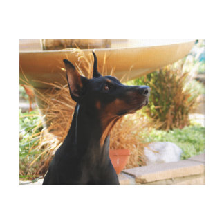 Doberman at ease stretched canvas print