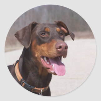 Doberman Classic Round Sticker