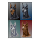 Doberman Colours Poster
