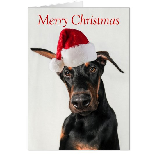 Doberman dog with Santa Hat Christmas card