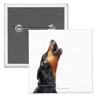 Doberman howling 15 cm square badge