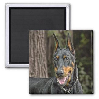 Doberman in Forest Magnet