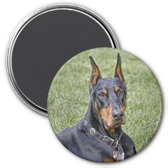 Doberman in Grass Magnet