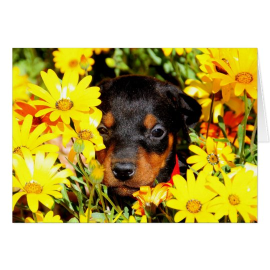 Doberman puppy greeting card