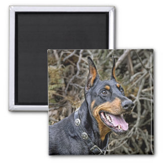 Doberman Smile Magnet