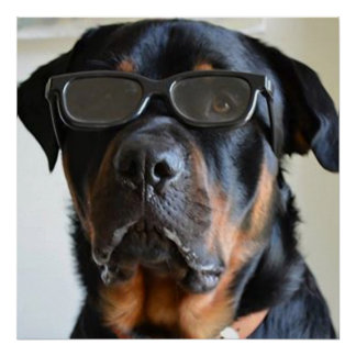 Doberman wearing glasses poster