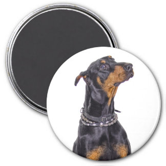 Doberman With Sneaky Look 7.5 Cm Round Magnet