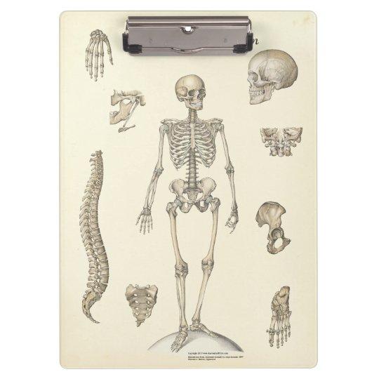Doctors Office Skeleton Anatomy Clipboard