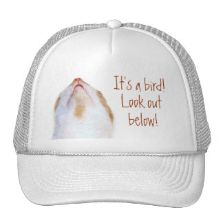 Dodge bird poop cap