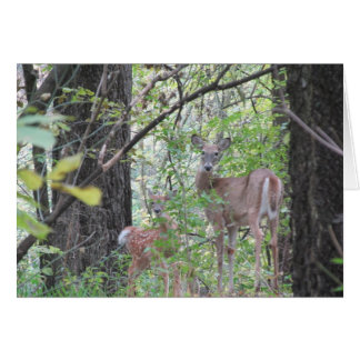 Doe and Her Fawn Card