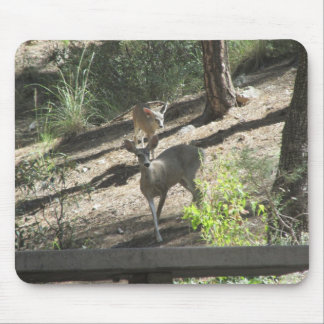 Doe and Her Fawn Mouse Pad