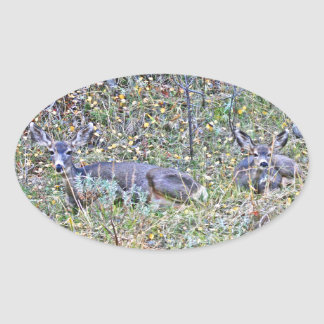 Doe deer and fawns oval sticker