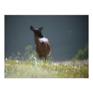 Doe (deer) in Cades Cove Poster