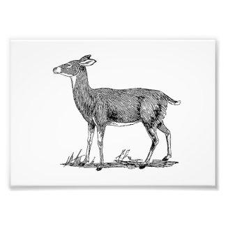 Doe Deer Art Photo