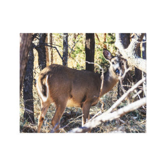 Doe Gallery Wrapped Canvas