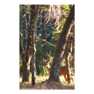 Doe in Nehalem Bay State Park Forest Custom Flyer