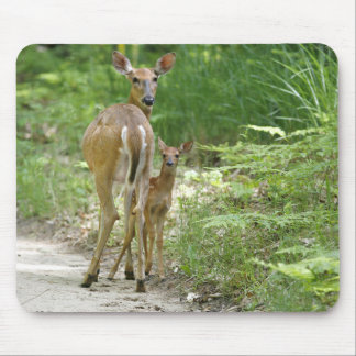 Doe With Fawn Mouse Pad