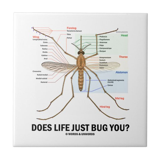 Does Life Just Bug You? (Mosquito Anatomy) Small Square Tile