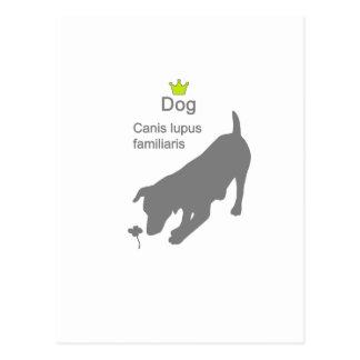 Dog2 g5 post card