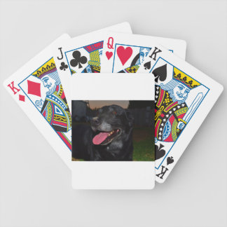 Dog 1 playing cards