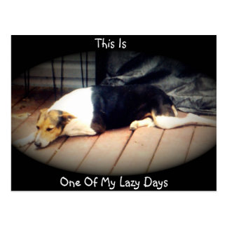 Dog #1, This Is  One Of My Lazy Days,Postcard Postcard
