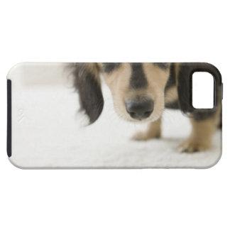 Dog 2 iPhone 5 cases