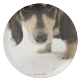 Dog 2 plate