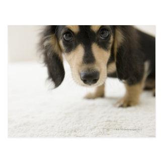 Dog 2 postcard