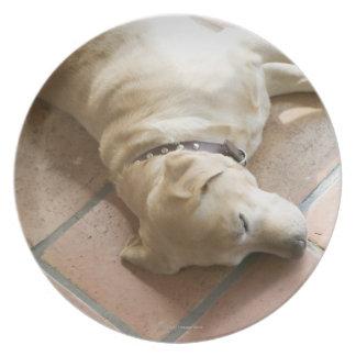 Dog 3 plate