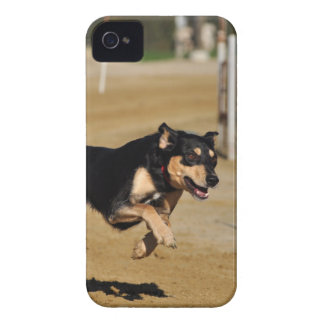 dog agility practicing iPhone 4 Case-Mate case